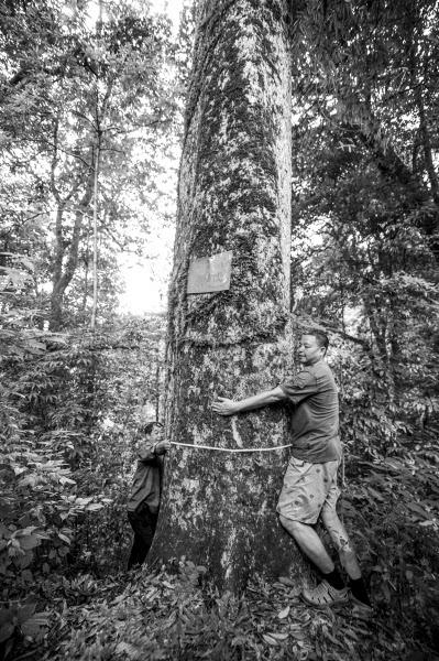 楠木生长缓慢,尤其以被誉为金丝楠的桢楠,闽楠,细叶楠等属大型乔木的