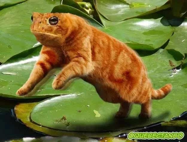 全世界最奇葩的动物,绝对颠覆你的认知