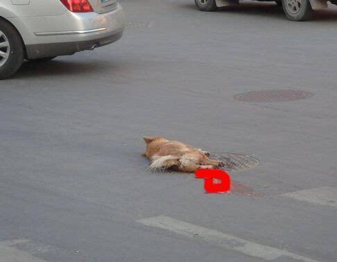嫩逼都被狗草了_司机碾死小狗称被逼给狗下跪 还被狗主人打了