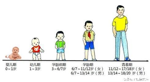体重标准v体重桥东惠阳小学淡水区图片