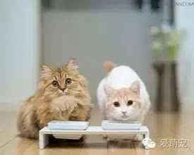 怎么训练小猫听话图片