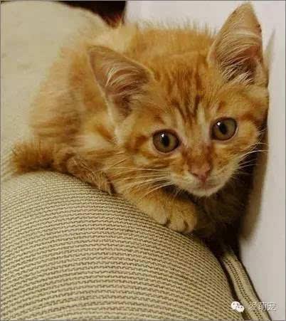 猫怎么训练听话图片