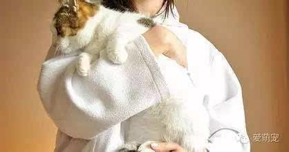世界上最乖的猫咪是什么图片