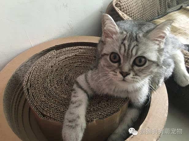 壁纸 动物 猫 猫咪 小猫 桌面 616_459