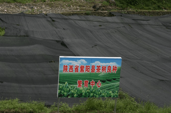 陕西紫阳县退耕还茶模式