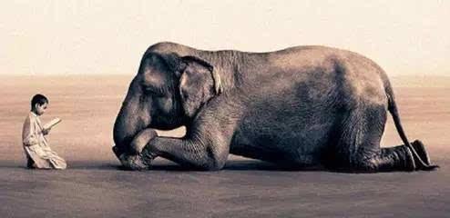 壁纸 大象 动物 494_240
