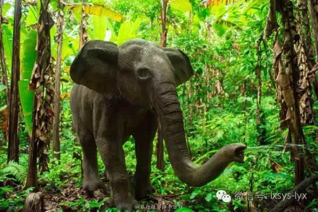 迷失在西双版纳热带雨林的国度里