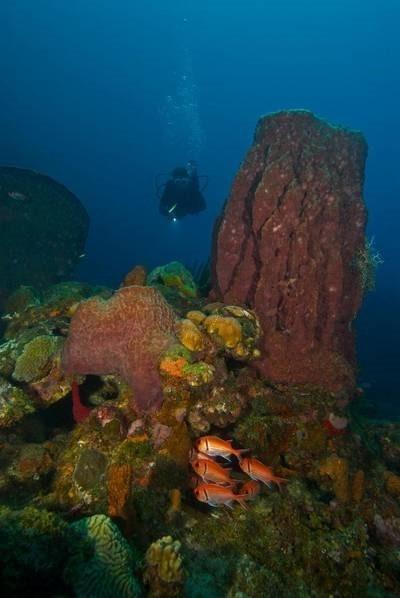 地球长寿动物大盘点:深海海绵能活11000年
