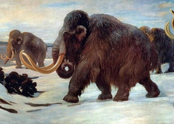 八千年前灭绝动物图片