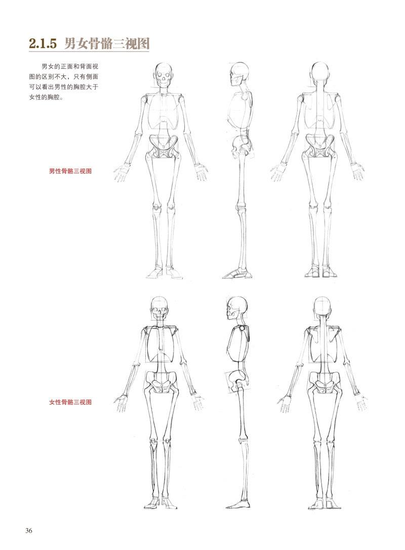 我们结合了伯里曼对人体结构分析的方式,用更加贴合游戏动漫人体结构