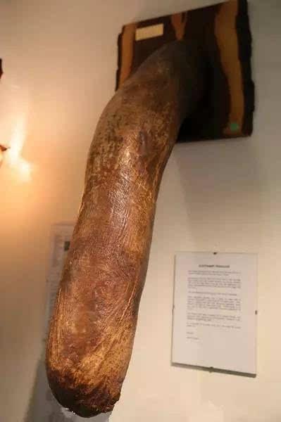 爷爷的阳具_这才成为阳具博物馆    首次展出的人类阳具       by jerry xu