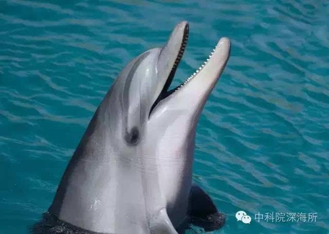 新知丨海洋哺乳动物的声世界