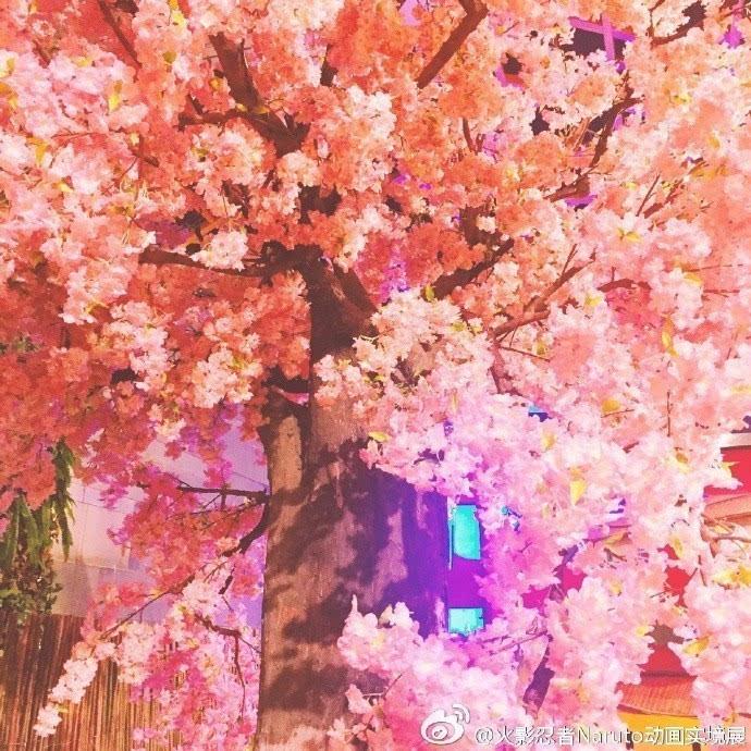 走在枝繁叶茂的樱花树下许愿