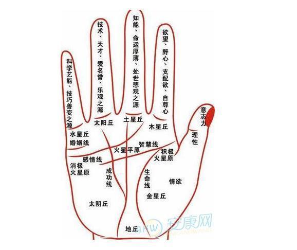 史上完整的感情线图解大全!参照自己的手相了解你的感情!