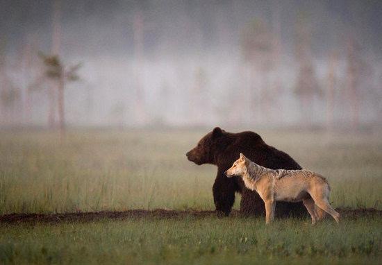 美国两小熊跳入居民家饮水池沐浴嬉戏