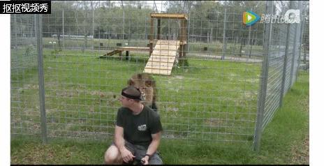 千万不能背对猫科类动物 看完视频你就明白了