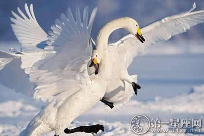 蒙古族神话传说——天鹅图腾