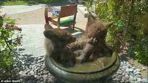 小熊跳入居民水池 全程被拍萌翻众人 盘点滑稽动物的另一面
