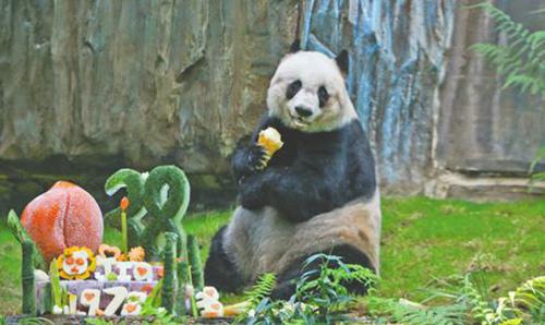 壁纸 大熊猫 动物 狗 狗狗 500_298