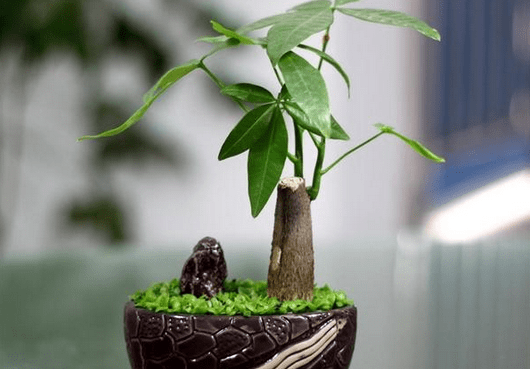 2017年植物摆放风水布局