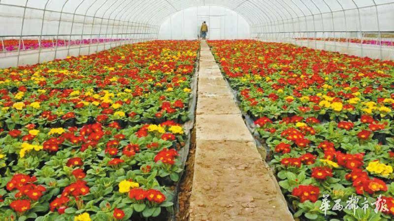 仲权花卉苗木基地按照功能分为了花卉生产,苗木培育,生态养殖三个区域