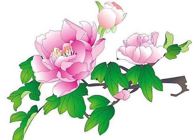 牡丹花抗旨不开花,原来是被人害了性命