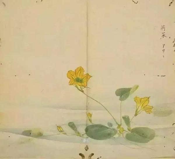 《诗经》中植物手绘图,美不胜收!