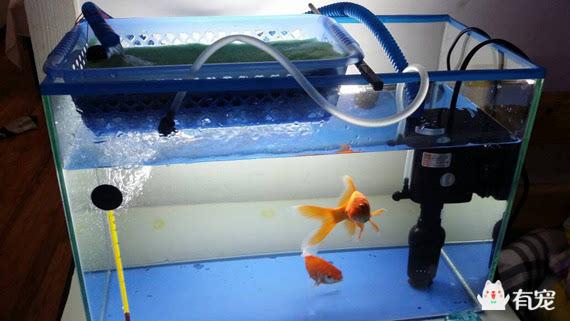 教你自制一个鱼缸过滤器!