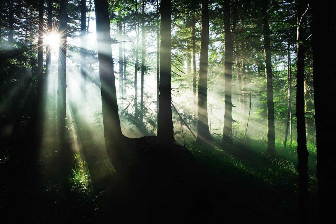 9月25日森林马拉松长白山站 脚步探秘原始森林