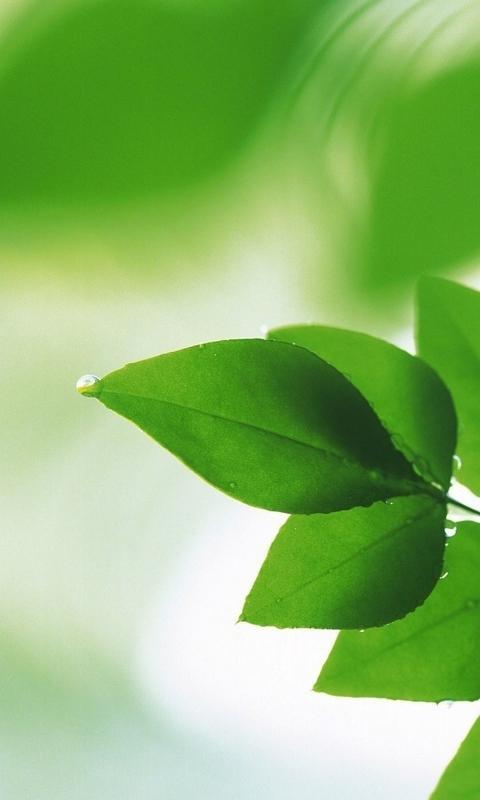绿色护眼高清手机壁纸