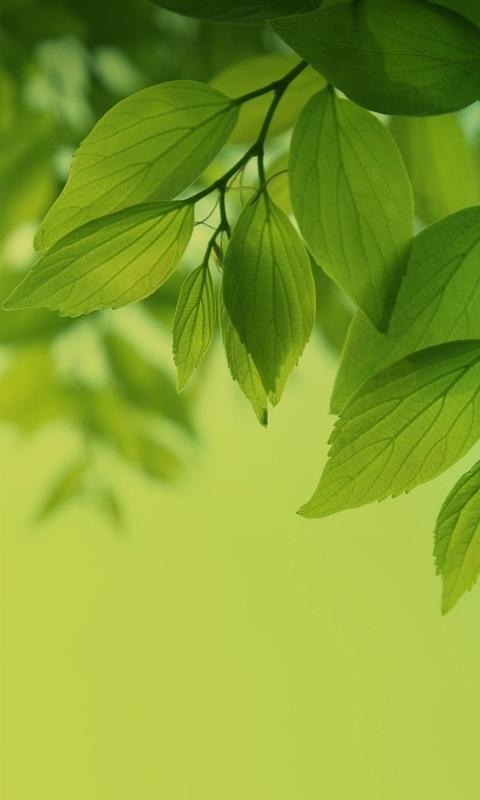 背景 壁纸 绿色 绿叶 树叶 植物 桌面 480_800 竖版 竖屏 手机图片