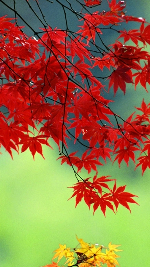 枫叶编织步骤图解