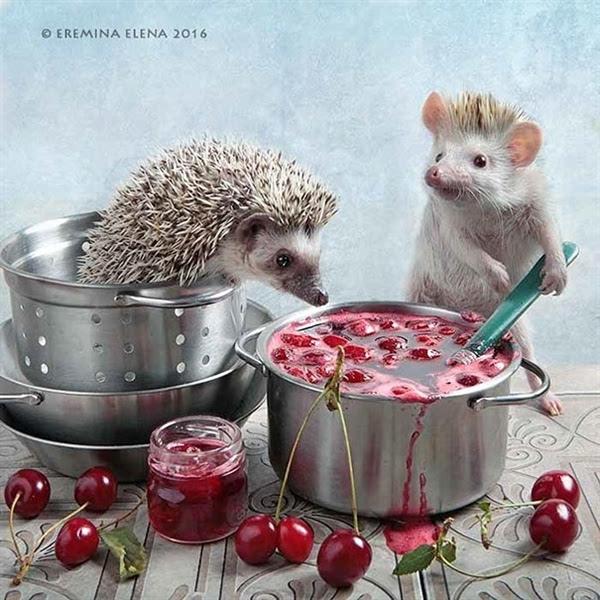 活的不如动物系列:呆萌小刺猬的幸福生活