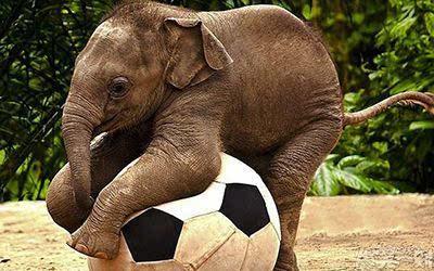 动物园学校的大象老师病了,班上.