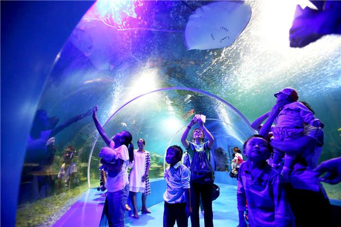 石林冰雪海洋世界开园首日5000游客争看海豚宝宝图片