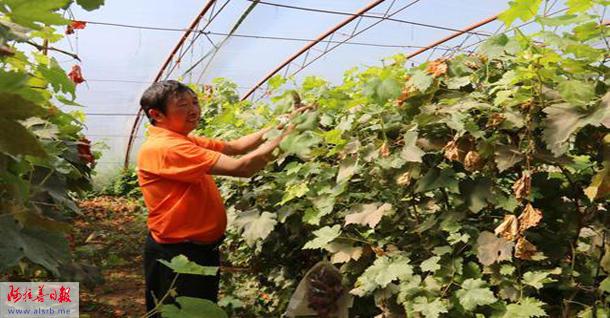 目前,巴润别立镇已种植枣树,苹果,李子,杏,黑果枸杞等林果共计4262亩