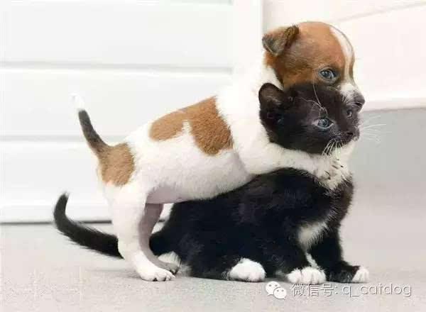 原来动物之间也会拥抱