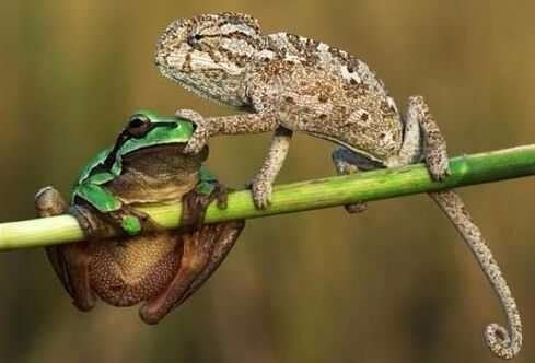 青蛙钱包钩织图解