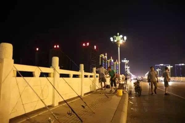 漯河桥上扦插,这事交警也管?月季花钓鱼步奏图片