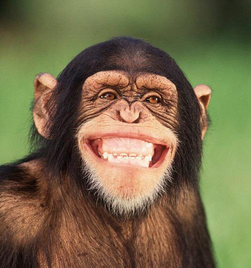 动物最萌的笑脸表情,笑呵呵!图片
