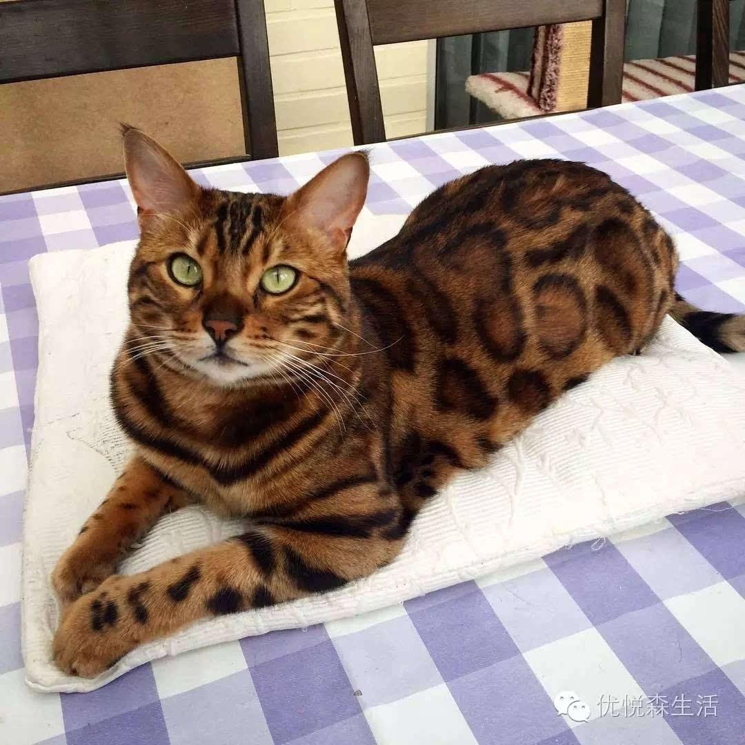 壁纸 动物 狗 狗狗 猫 猫咪 小猫 桌面 1080_1080