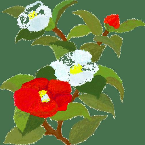 (山茶花=日文【椿つばき】) 椿(つばき)是日本一种花卉,受欢迎程度和
