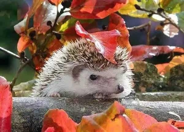 小动物们躲雨的方式,太神奇了
