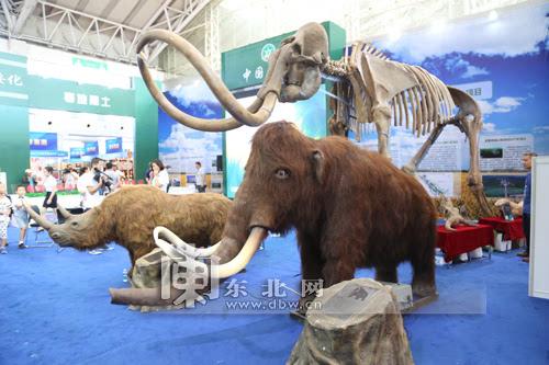 青冈县4万年前冰河世纪的猛犸象,披毛犀化石实体标本和仿真模型格外引