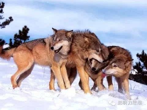 团队跟动物合影照