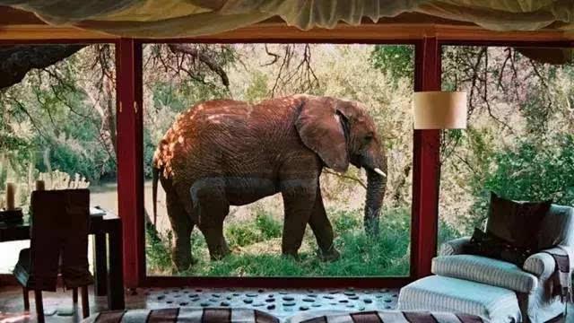 动物旅馆 儿童创意