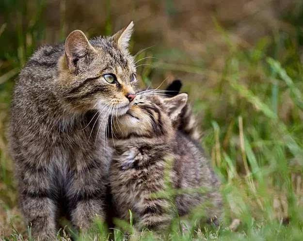 动物们的亲子照,真是萌哭了!