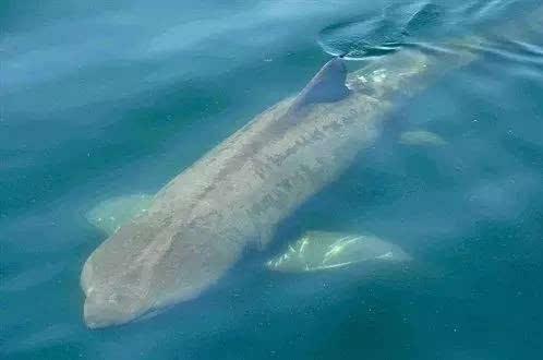 壁纸 动物 海洋动物 桌面 498_330