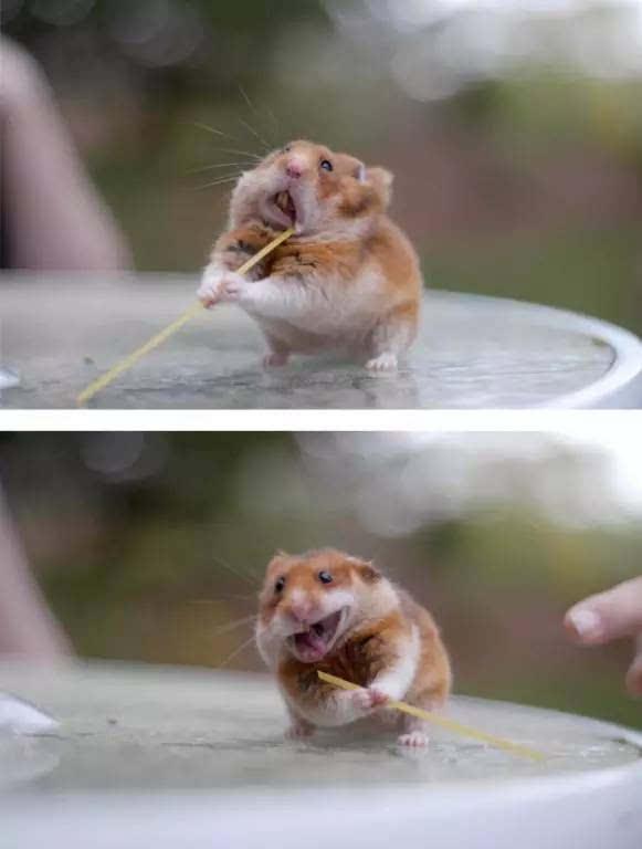 快来围观小动物吃东西,它们的可爱总是让人忍俊不禁