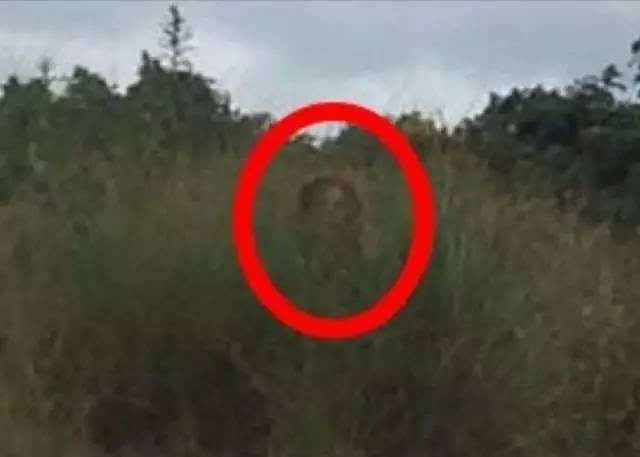 考眼力!你能找出这8张图片的恐怖之处吗?